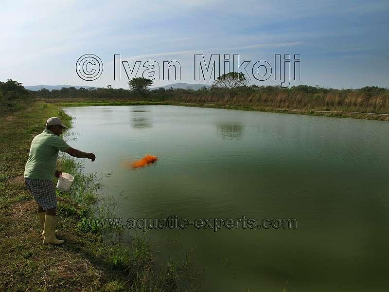 Granjas acuaticas for Cria de peces ornamentales