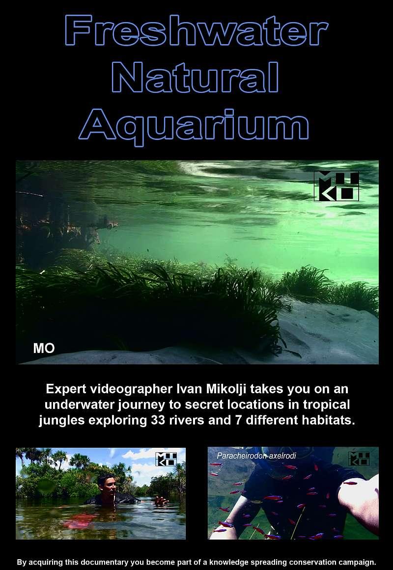 Freshwater aquarium fish documentary - Freshwater Natural Aquarium Documentary