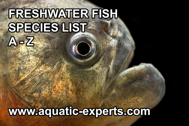 FRESHWATER FISH b rings you a database of all the freshwater fish that ...